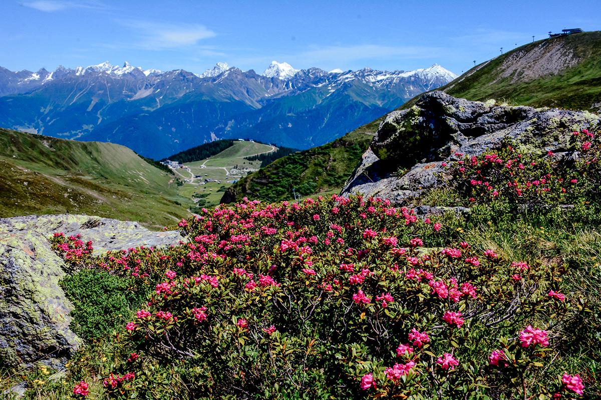 Natur Sommer